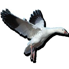 Gisba Slaapcomfort BV. in vogelvlucht